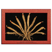 Selected Fallow Ginseng (20gm)